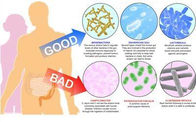 پروبیوتیک ها موجب مهار بیماری ها می شوند
